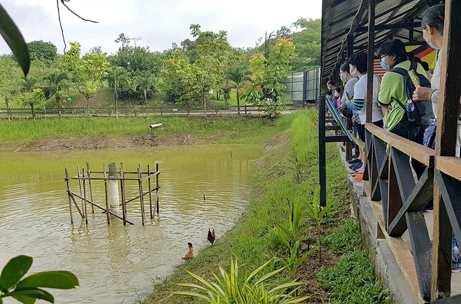 婆罗洲开心农场